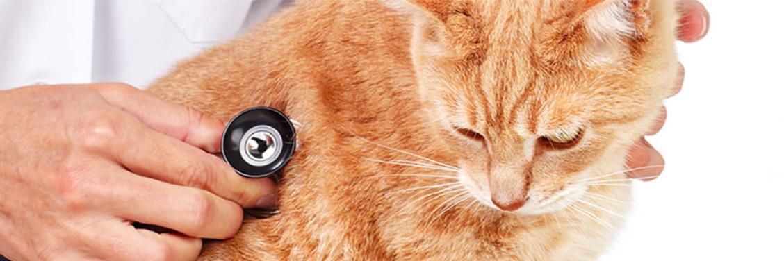 VCA Animal Hospitals: Life   LinkedIn