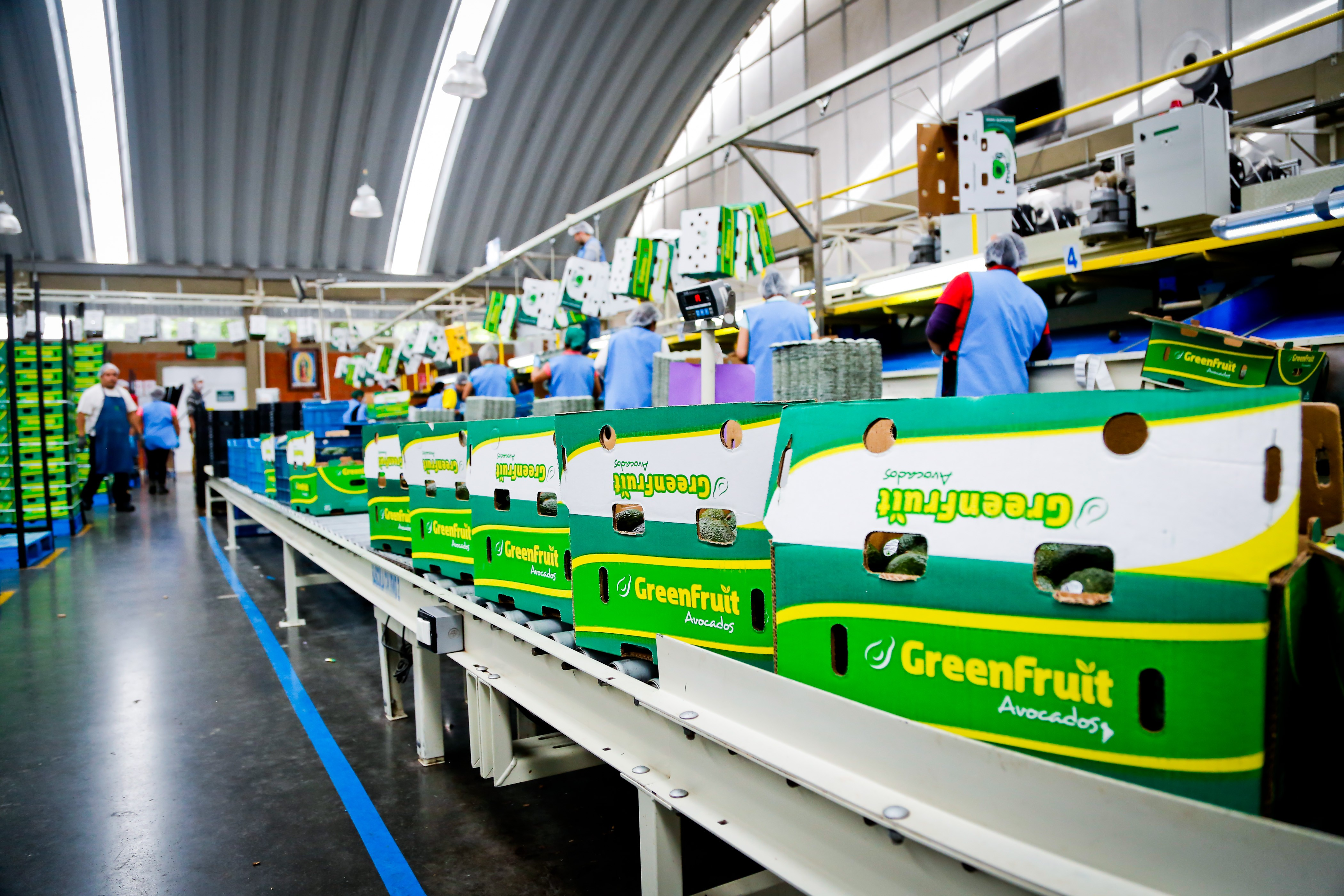 GreenFruit Avocados   LinkedIn