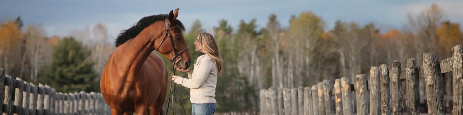 Greenhawk Equestrian Sport | LinkedIn