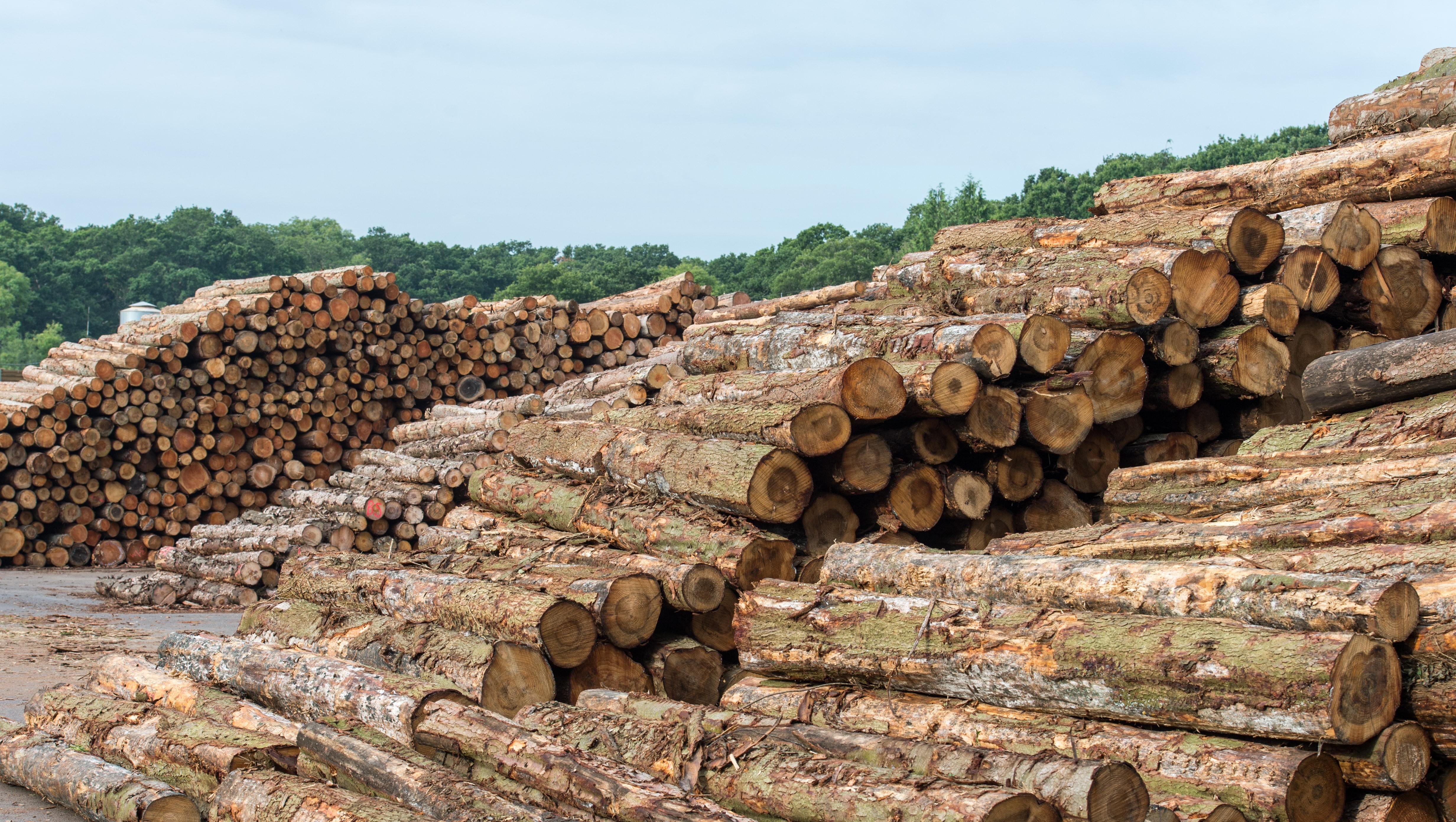 BSW Timber Ltd | LinkedIn