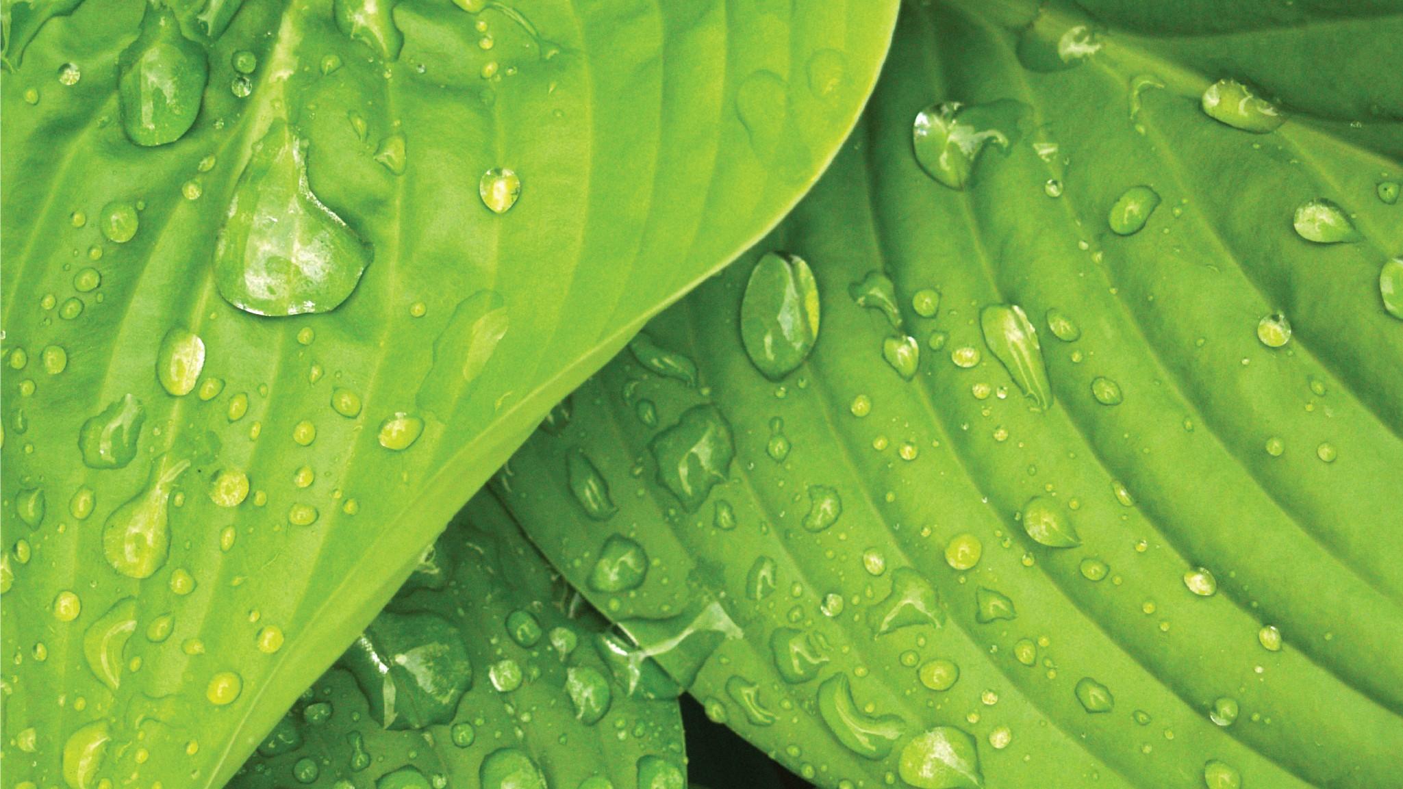 Green and Leaf | LinkedIn