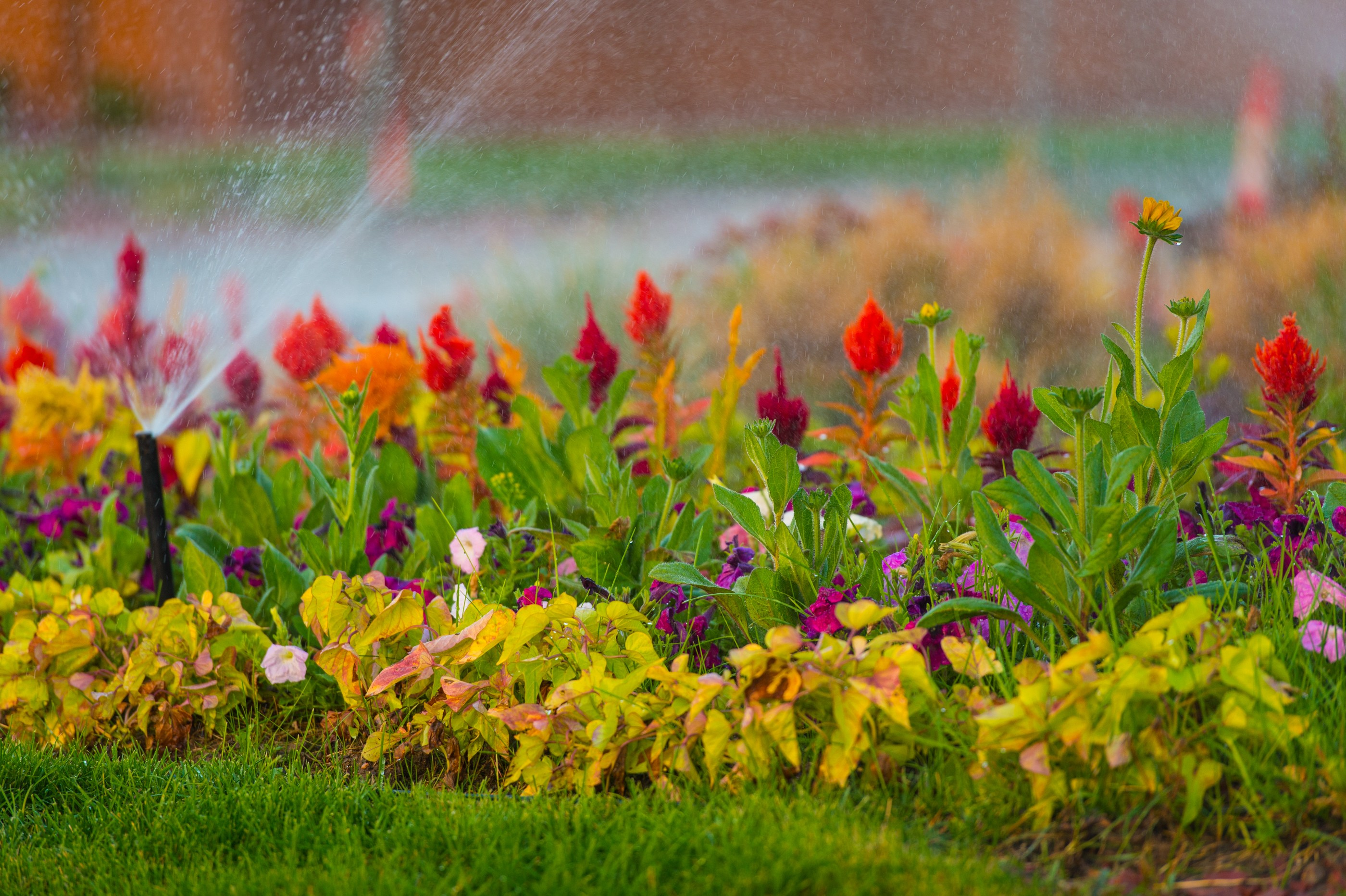 The smart Trick of Temecula Landscaping That Nobody is Talking About