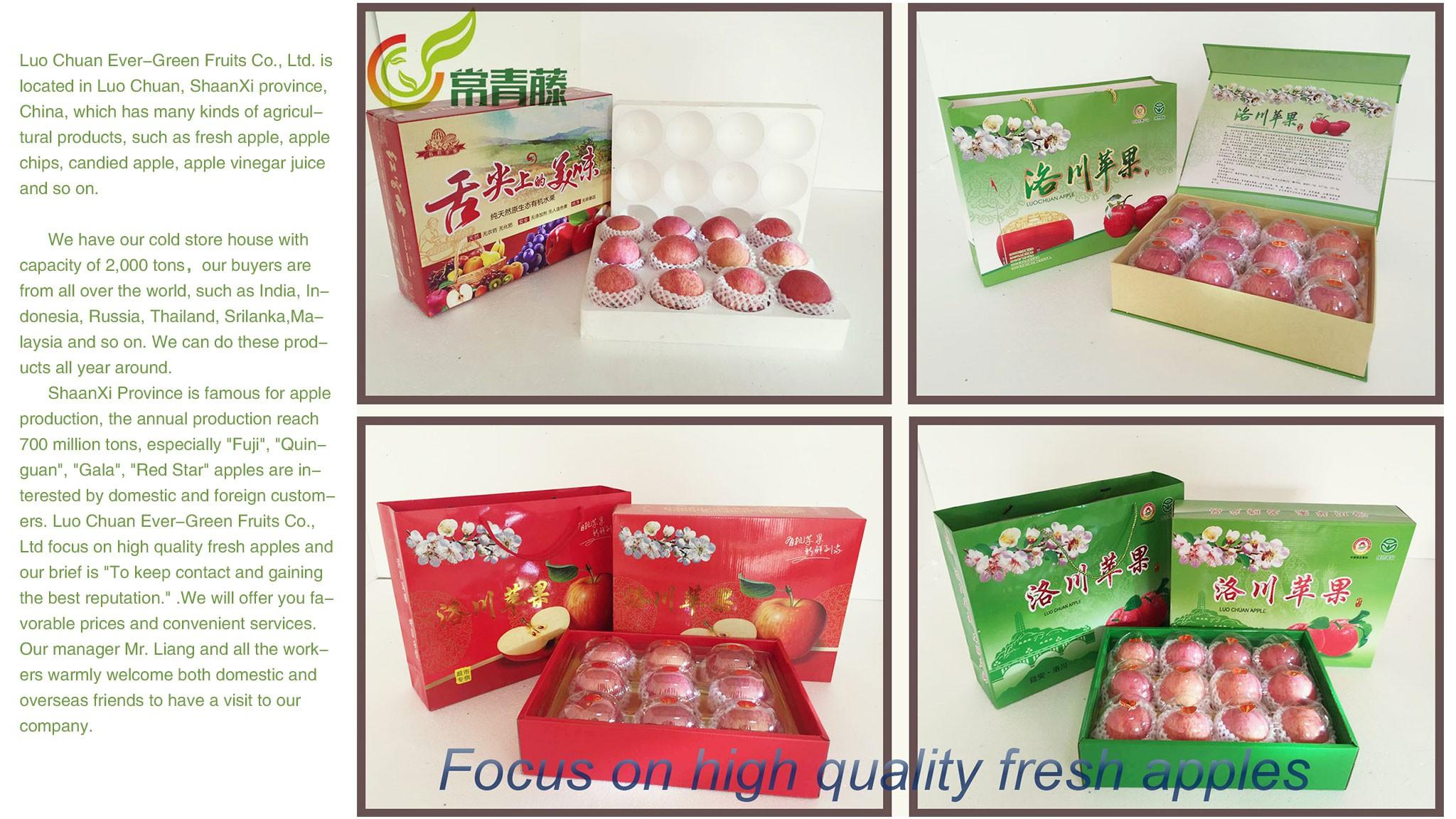 Luo Chuan Ever-Green Fruits Co , Ltd  | LinkedIn