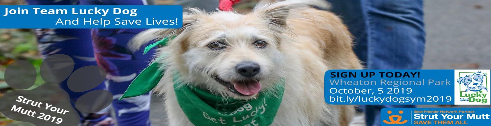 Lucky Dog Animal Rescue   LinkedIn