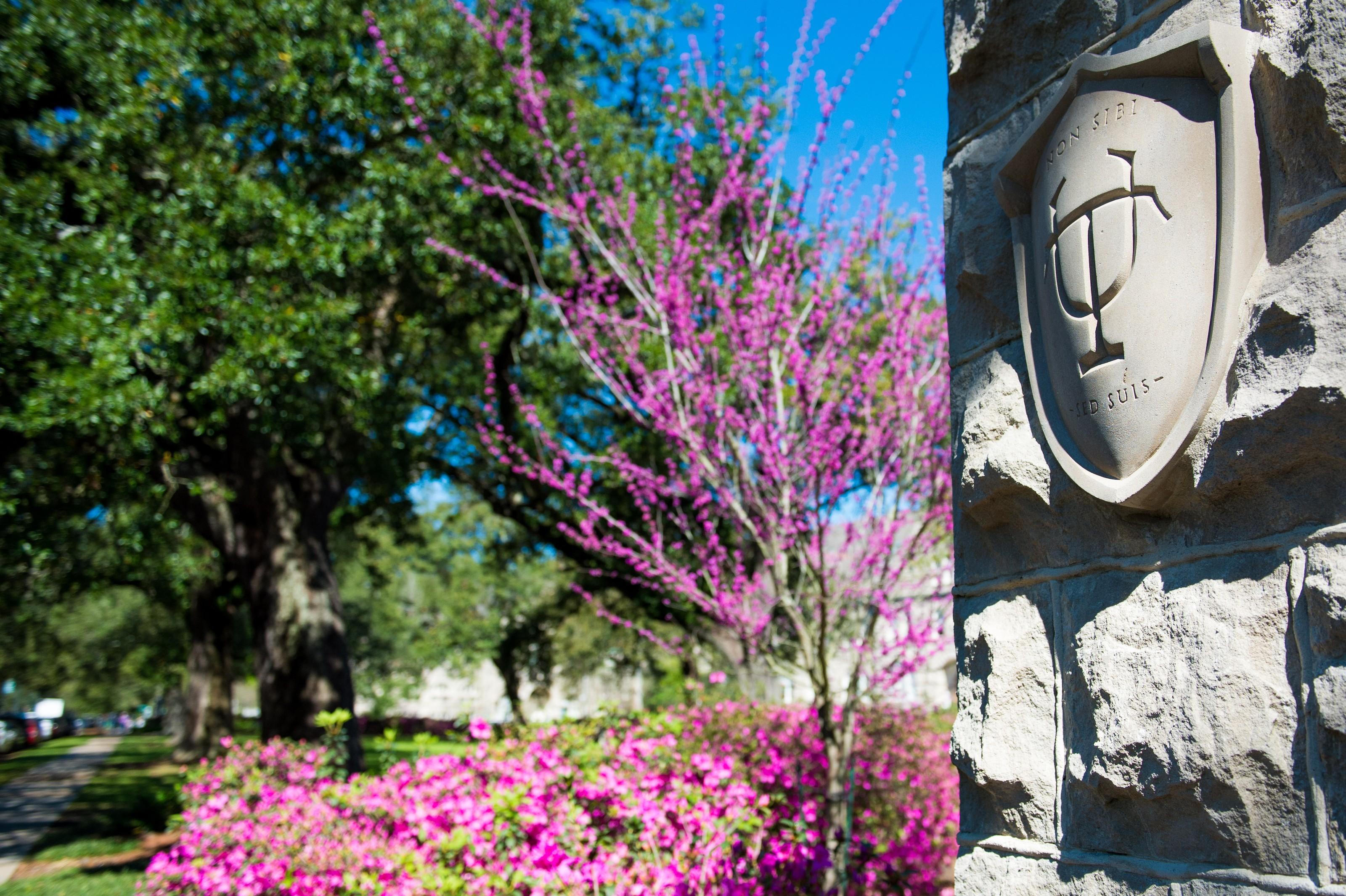 Tulane University | LinkedIn