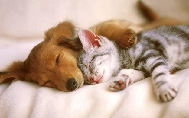 League For Animal Welfare   LinkedIn