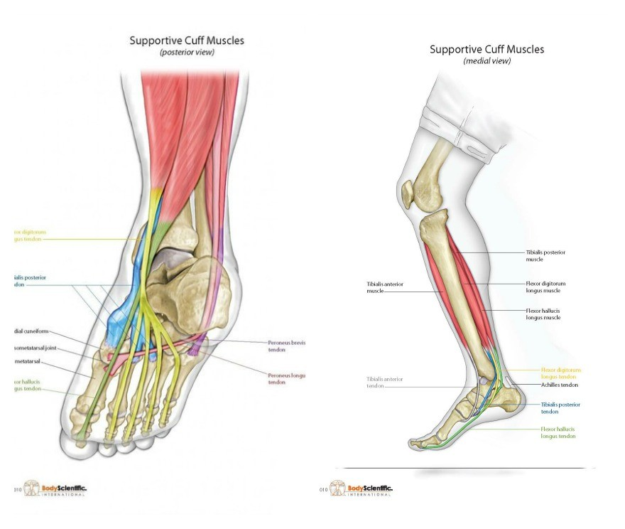 What Is Foot Pronation And Foot Supination? Is It Good Or Bad?   Dr ...