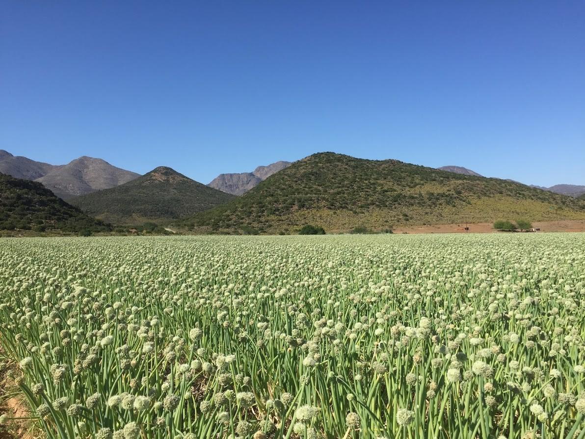 Tozer Seeds | LinkedIn