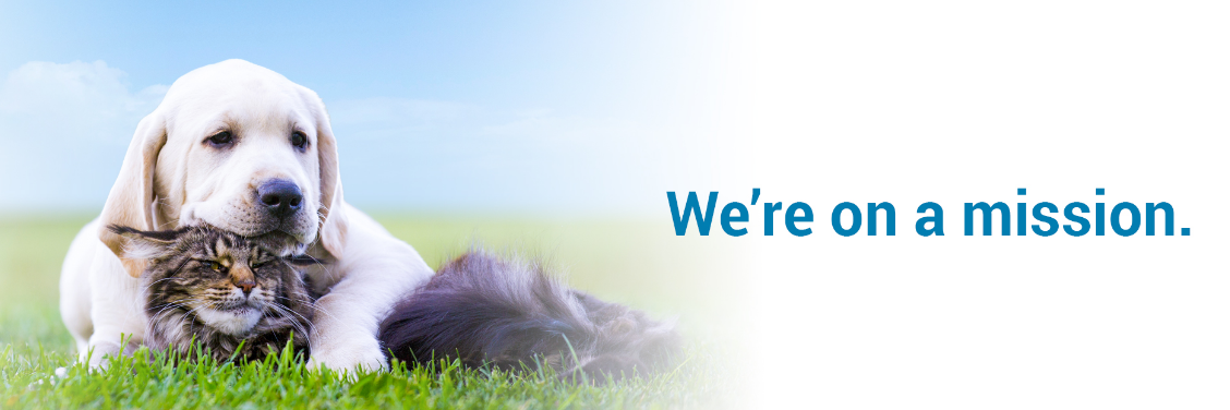 Midwest Veterinary Partners: Life | LinkedIn