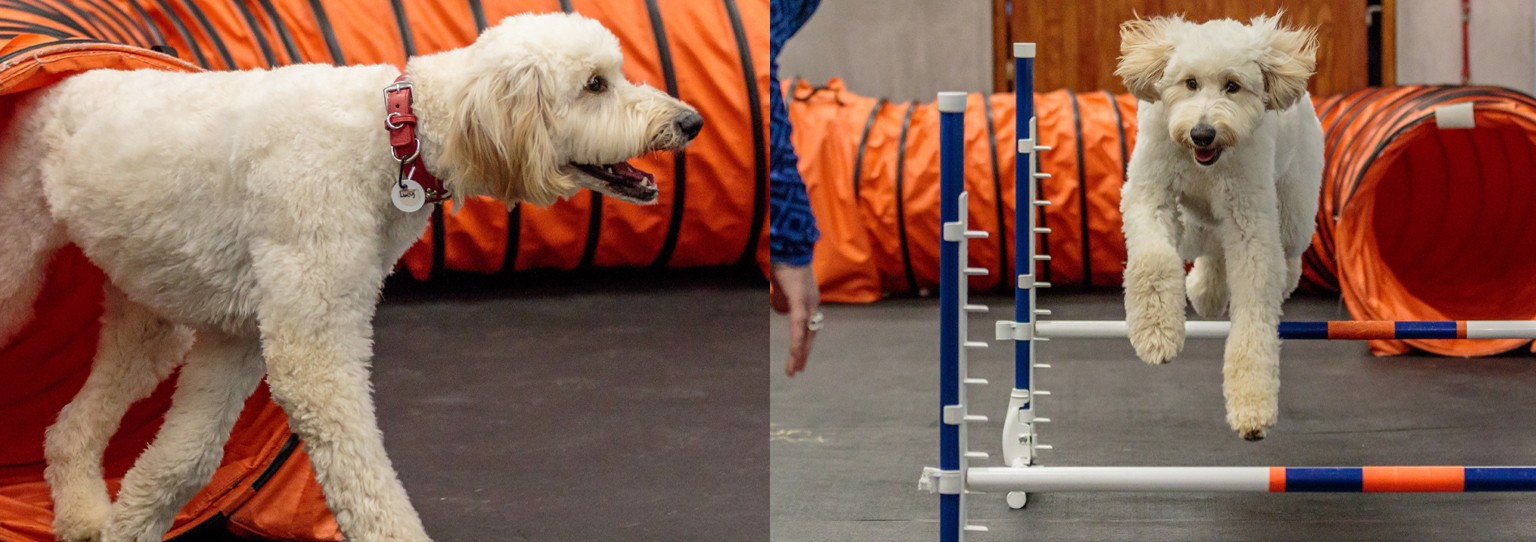 Zoom Room Dog Training | LinkedIn