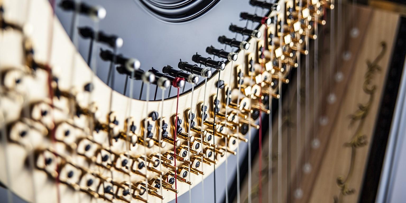 Salvi Harps | LinkedIn