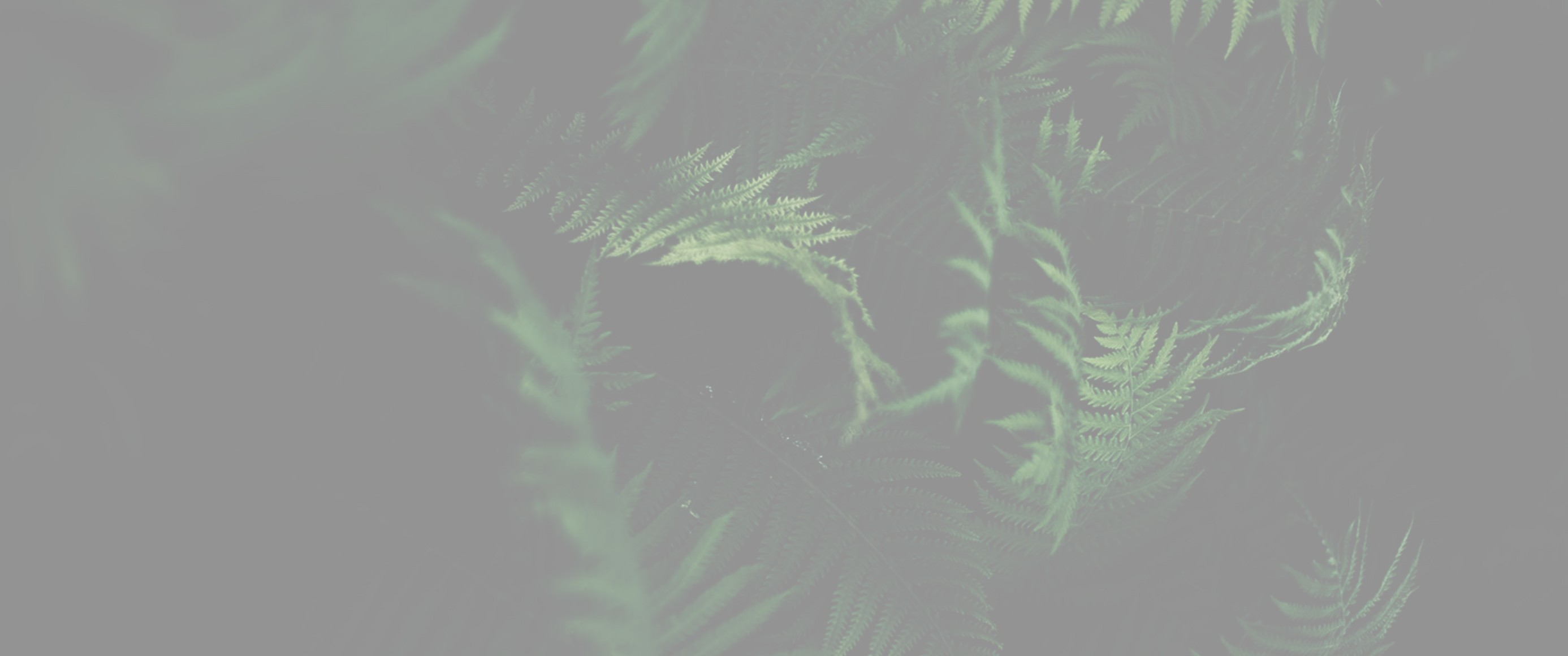 Venator Recruitment | LinkedIn