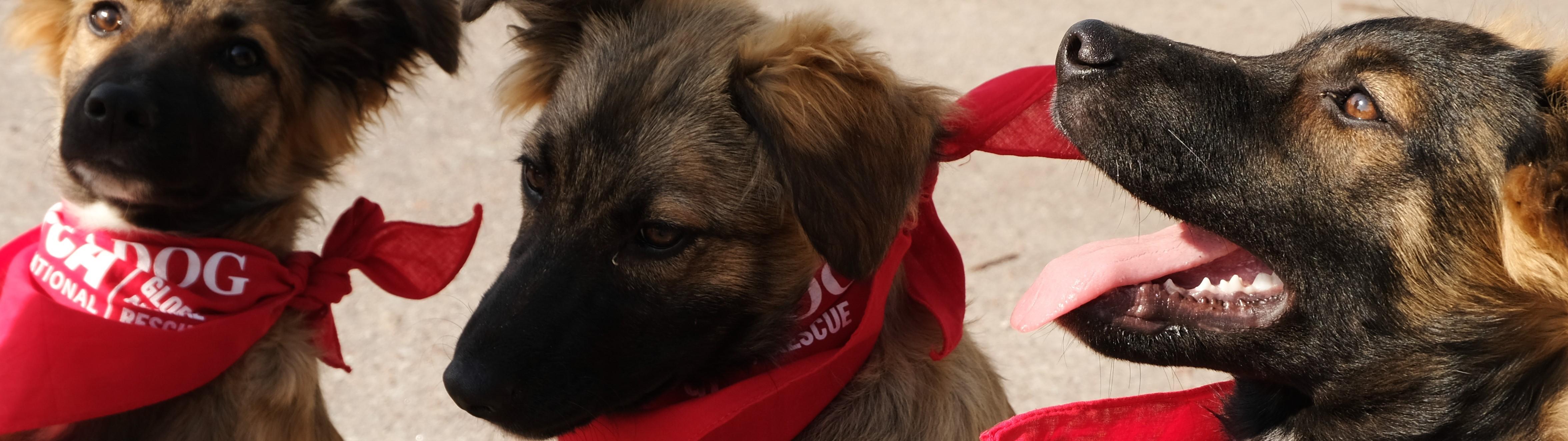 SPCA International | LinkedIn