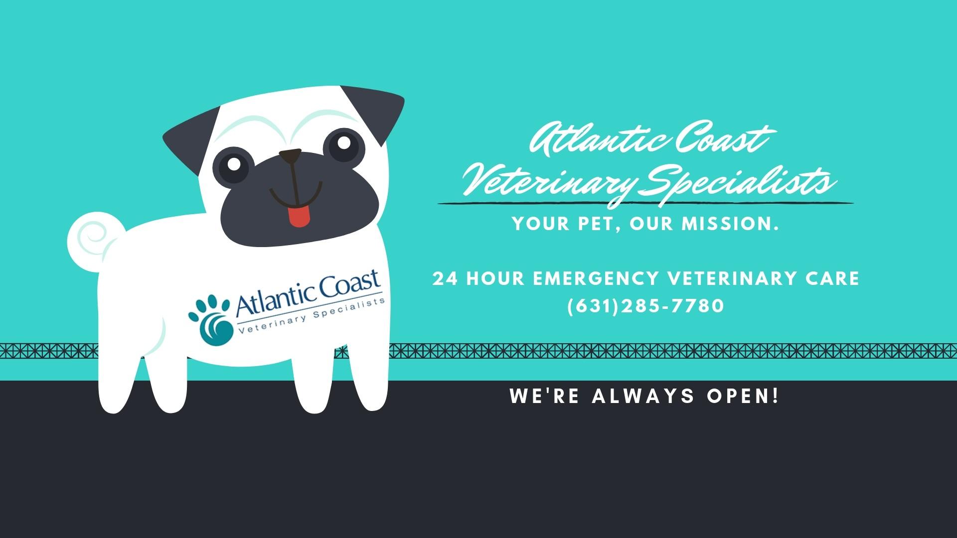 Atlantic Coast Veterinary Specialists   LinkedIn