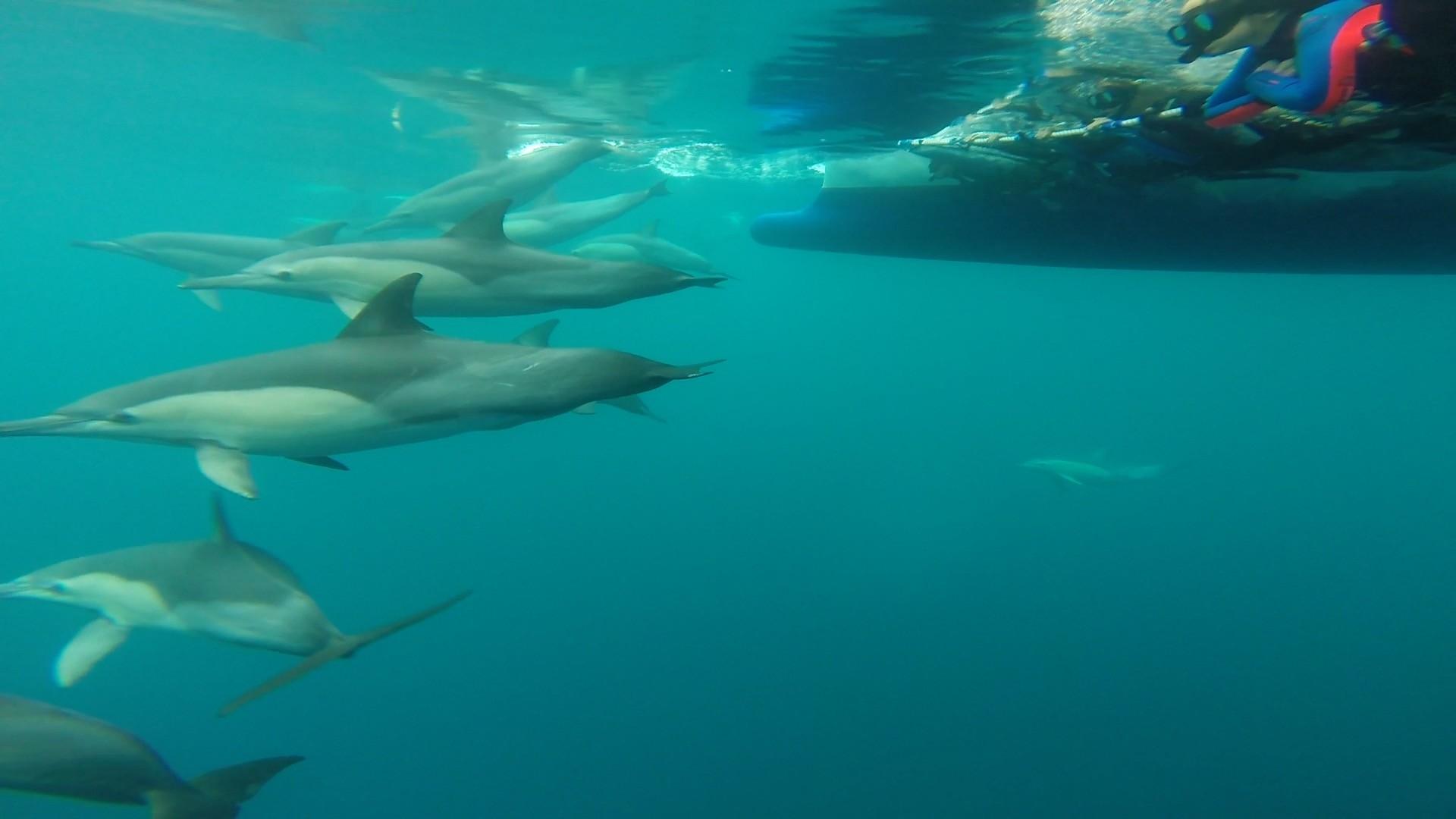 Dolphin Swim Australia   LinkedIn