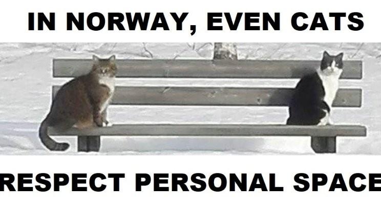 Norwegian Cats   Julien S. Bourrelle   Pulse   LinkedIn