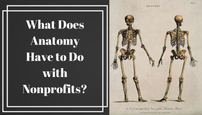 What Does Anatomy Have to Do with Nonprofits?   Jane Cox   Pulse ...