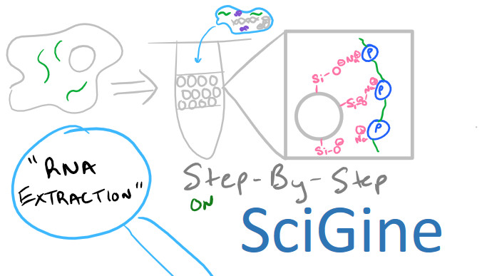 rna extraction isolation and purification by scigine